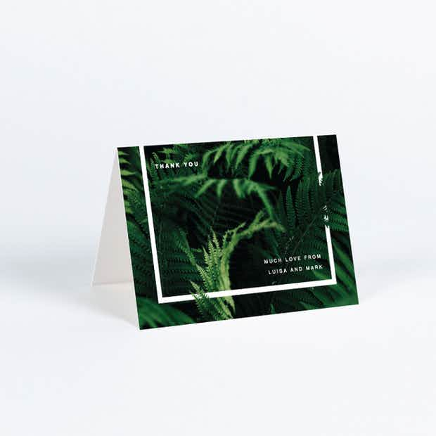 Exquisite Ferns - Main
